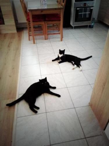 aventuri cu pisici